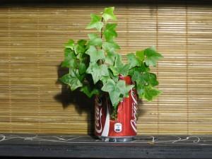 Canette de soda végétalisée