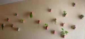 Mur de canettes
