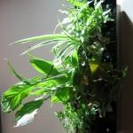 Cadre végétal inox