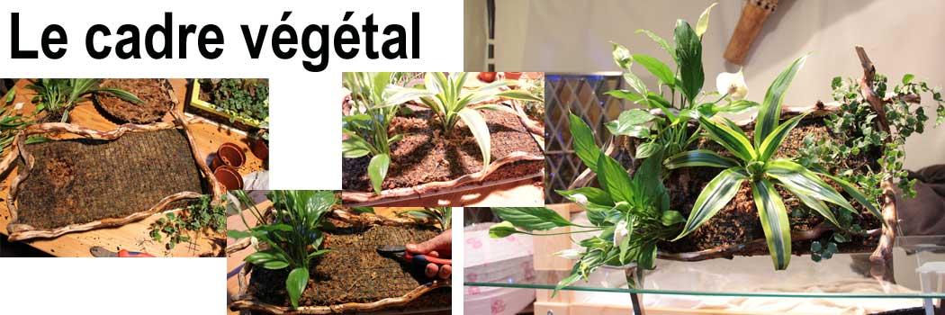 Sphaigne du chili comment introduire la v g tation en masse - Mur vegetal exterieur pas cher ...
