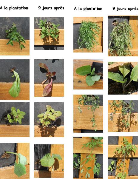 Comparaison-légumes-Sphaigne